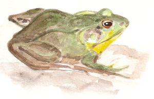 abelia frog