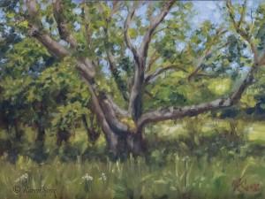 Oil painting of a tree in Connemara, Ireland, painted June 2015